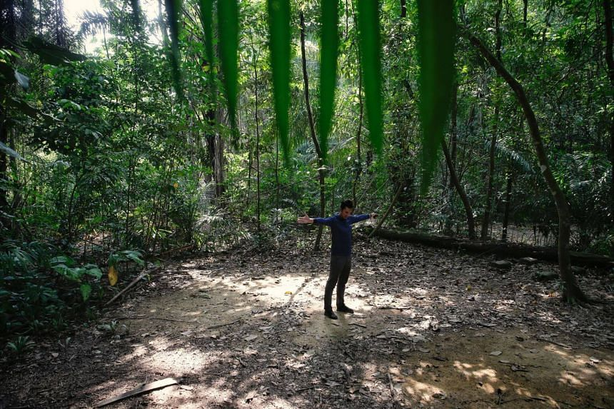An LTA engineer working in the Cross Island Line showing the approximate location and width of a boring site at the Central Catchment Nature Reserve in 2018.