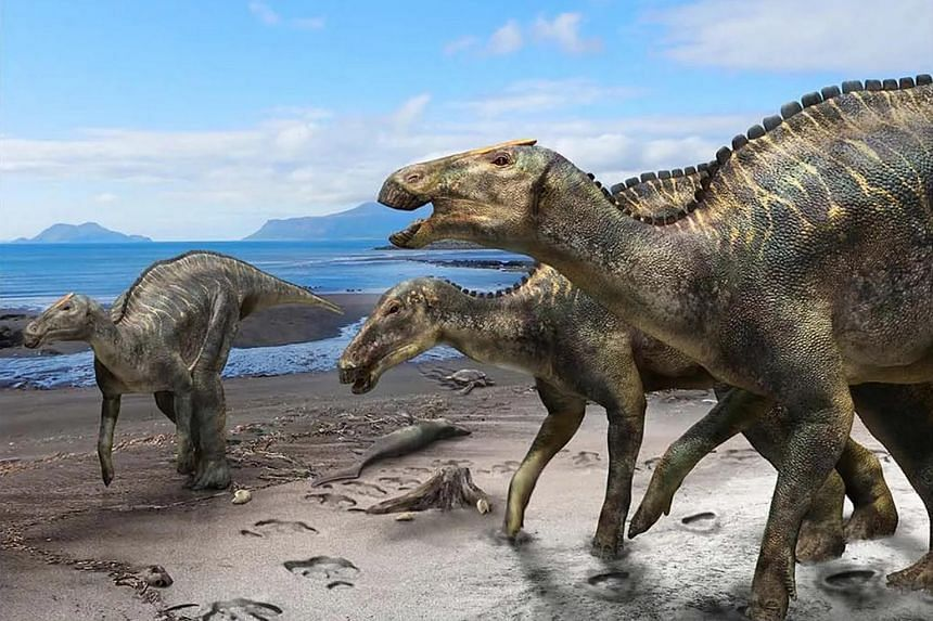 Image result for Japanese scientists find new dinosaur species