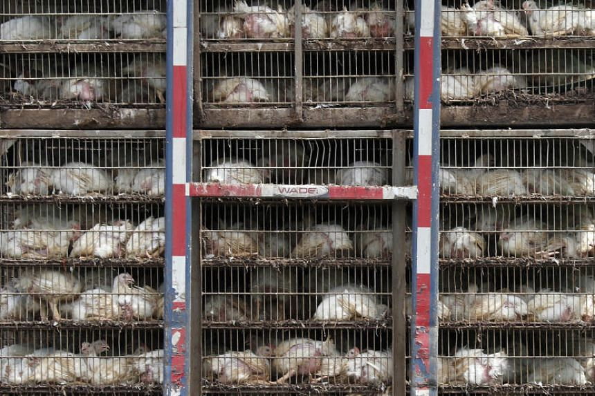 In photo taken on Aug 8, chickens are shipped for processing in Morton, Mississippi. The EU has long refused to import poultry from the US that is routinely rinsed with chemical washes to kill germs.