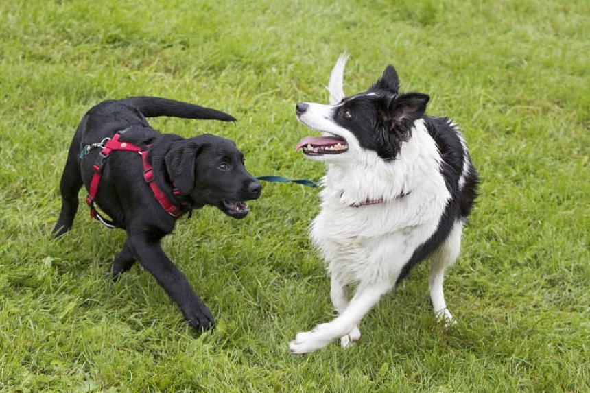 Some 200 dogs have displayed symptoms of bloody diarrhoea and vomit, intense fatigue in recent weeks and around 25 of them have died, Norway's Veterinary Institute said on Sept 9, 2019.