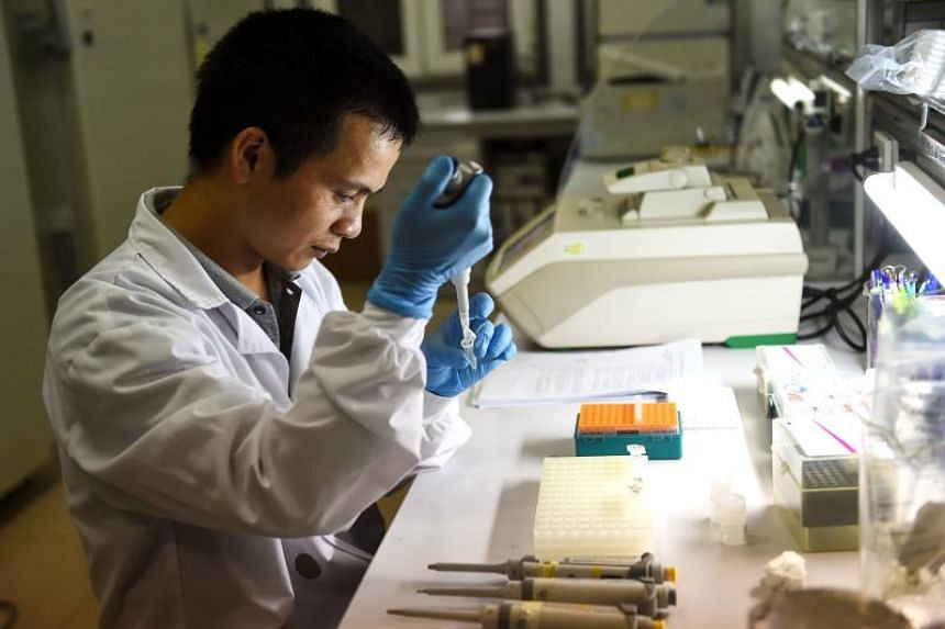 A laboratory official examines mosquito samples at the National Institute of Hygiene and Epidemiology in Hanoi.