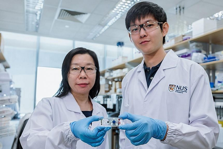 Assistant Professor Shao Huilin and doctoral student Noah Sundah with the Stamp microfluidic device that they and their team developed. The technology can detect and classify cancer cells, as well as determine the disease's aggressiveness. Patients a