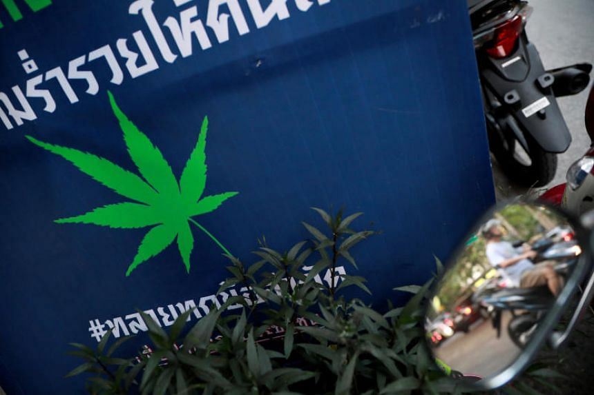 Under Thailand's current drug laws, recreational users of cannabis can incur tough penalties, including up to 10 years in prison for possession and hefty fines.