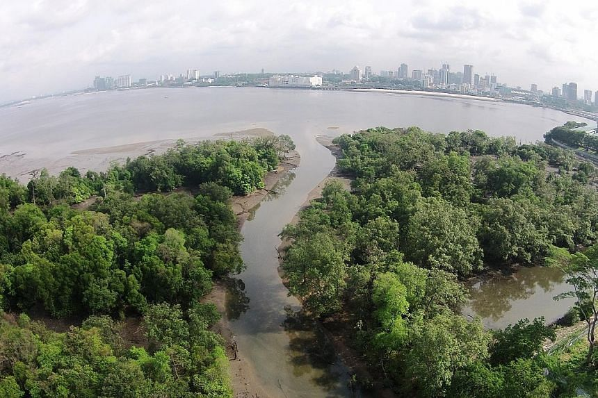 The Mandai Mangrove and Mudflat. The idea of nature-based climate solutions is gaining traction among governments, non-governmental organisations and businesses. PHOTO: NATIONAL PARKS BOARD