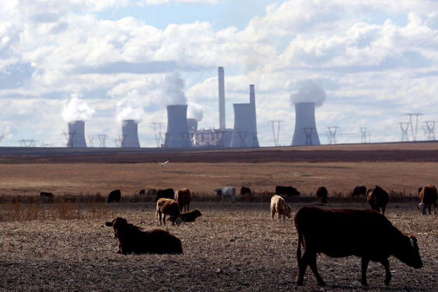 In a picture taken on May 20, 2018, cows graze as steam rises from the cooling towers of Matla Power Station, a coal-fired power plant operated by Eskom in Mpumalanga, South Africa.
