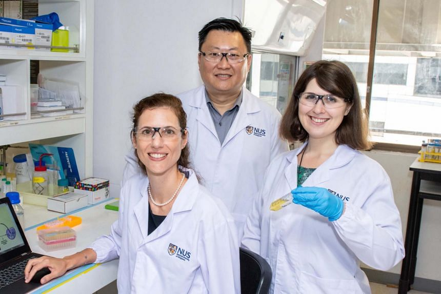 (From left) Associate Professor Giorgia Pastorin, Associate Professor Ang Wee Han and Dr Maria Babak with the new drug they are developing, which could eliminate cancer tissues with fewer toxic effects.