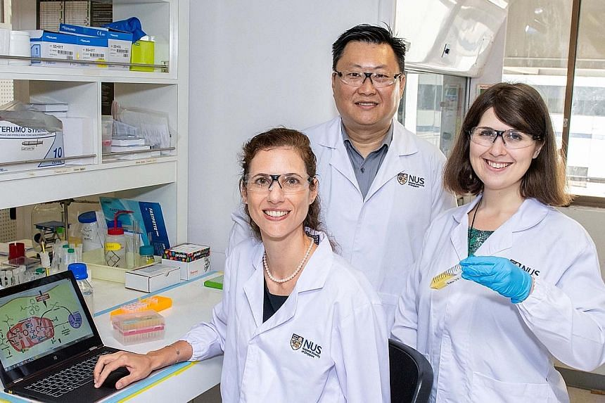 Associate Professor Ang Wee Han, Associate Professor Giorgia Pastorin and Dr Maria Babak (far right) with the new drug they are developing that can distinguish between cancer and healthy cells. PHOTO: NATIONAL UNIVERSITY OF SINGAPORE