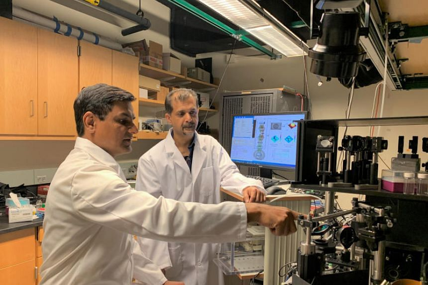 Dr Vijay Raj Singh, a research scientist at Smart, and Dr Zahid Yaqoob, MIT LBRC Principal Investigator, study tumor cells using the newly developed microscope. It is the first microscope that can capture the nuclear membrane fluctuations of live cel