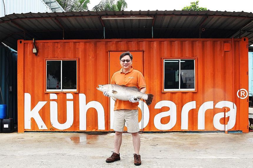 Mr Kwan's investment firm owns Barramundi Asia, which sells the increasingly popular fish under the Kuhlbarra brand.