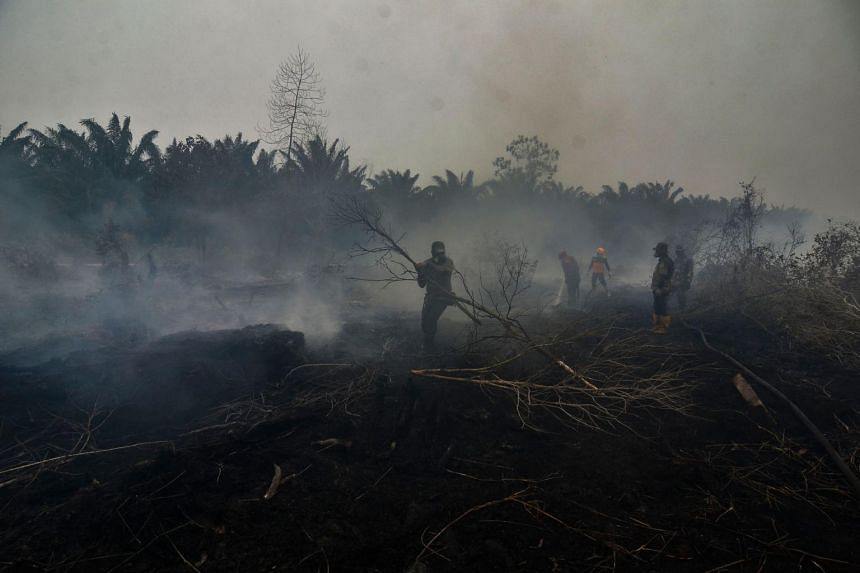 Indonesian firefighters battle a forest fire, one of many spewing toxic haze across the region causing an increase in reports of respiratory illnesses, in Kampar, Riau on Sept 23, 2019.