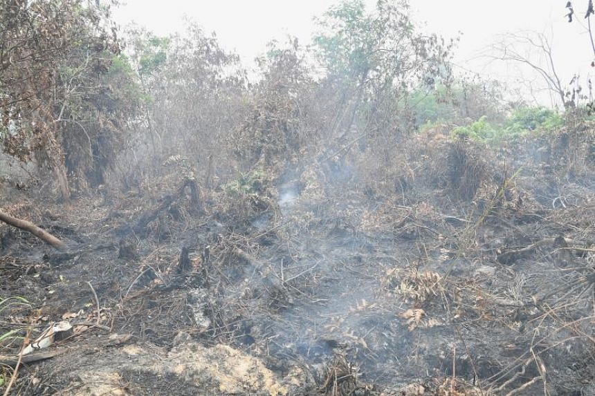 The National Environment Agency said it is monitoring the current haze situation closely, although it has not taken any action against firms under the Republic's Transboundary Haze Pollution Act this year.