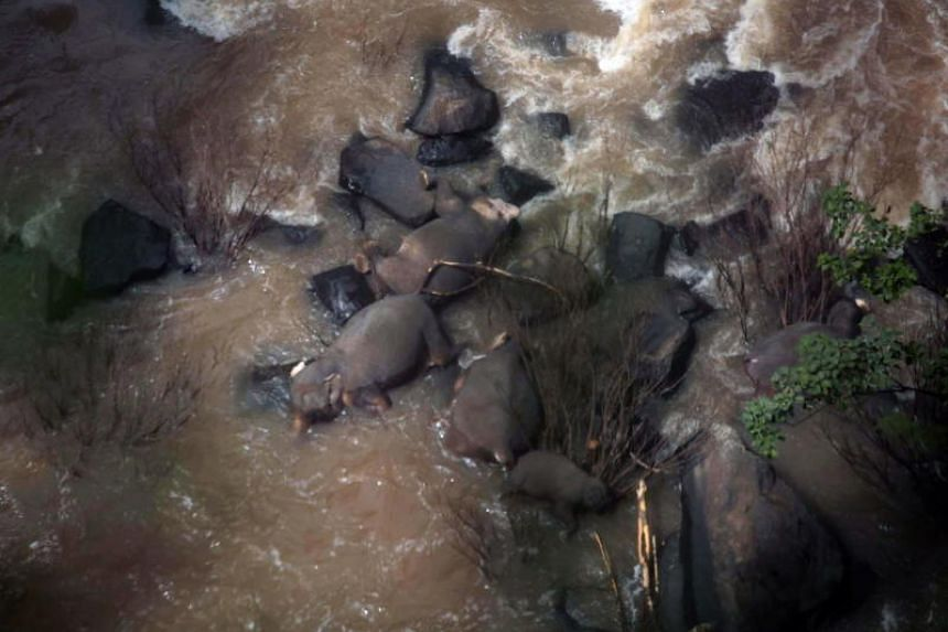 Some of the elephants that died in the Haew Narok Waterfall at Khao Yai National Park, in Thailand's Prachin Buri province, on Oct 5, 2019.