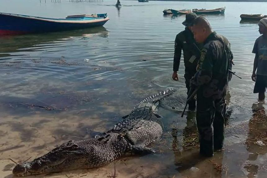 Philippine police inspect a 4.9m saltwater crocodile after it was killed on the remote island of Balabac.