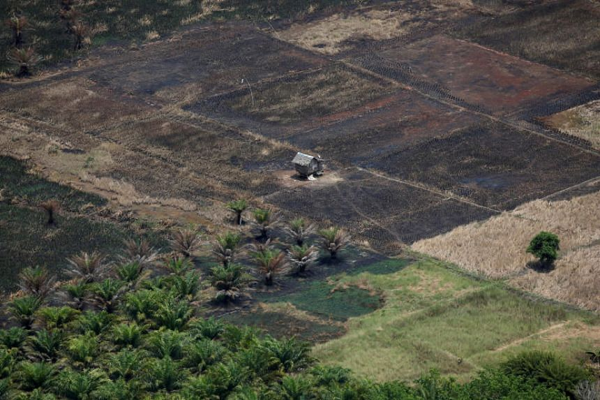 A photo taken on Sept 29 shows burnt land next to an oil palm plantation in Indonesia's South Kalimantan province. A government investigation found that 3.1 million hectares of the country's total oil palm plantations are operating without permits.