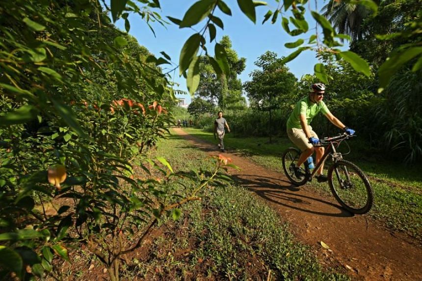 A man rides a bicycle on a dirt road surrounded by greenery.