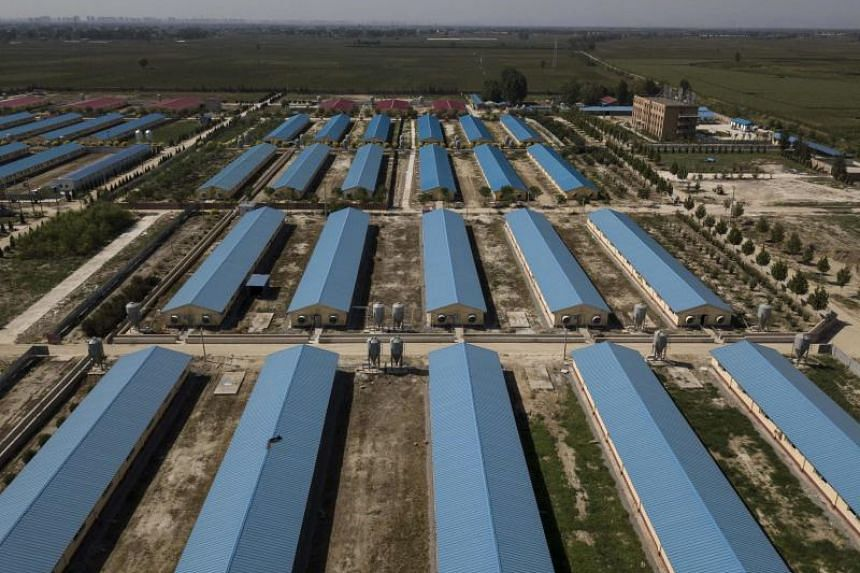 This picture taken on Sept 24, 2019, shows a quarantined pig farm in Hebei, outside Beijing.