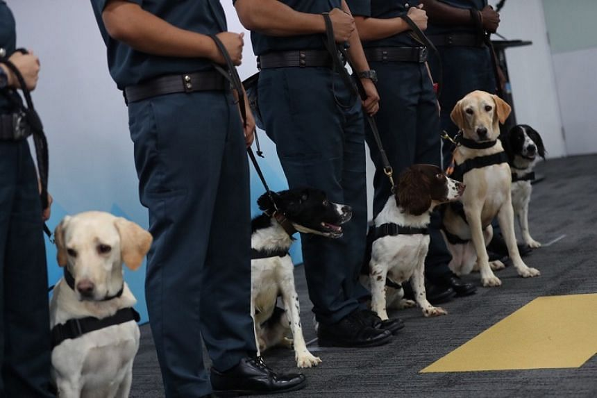 Sniffer dogs from Certis's new K-9 unit at a presentation ceremony at the firm's headquarters in Paya Lebar on Oct 16, 2019.