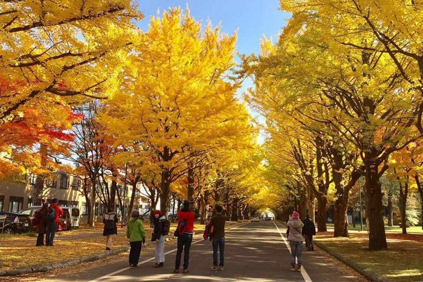 A photo taken on Aug 4, 2018, of autumn scenery in Sapporo. The proposed move of the marathon and race-walking events to Sapporo will result in a temperature reduction of 5-6 deg C.