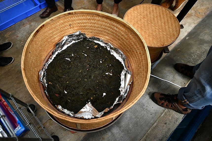 A dehydrator is used to extract liquid from the waste to keep it dry. The waste is then placed in compost bins and black soldier fly larvae are loaded into them to start the composting process. Black soldier fly pre-pupae climbing up ramps inside a c