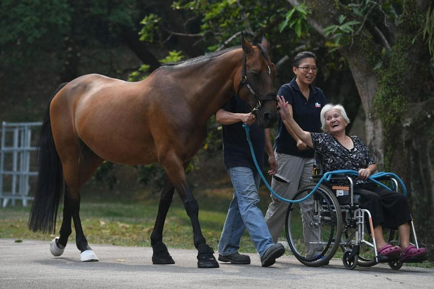 St. Theresa's Home resident Agatha Lee (in wheelchair) strolling with Argentinian former polo pony Costera on Sept 17, 2019.