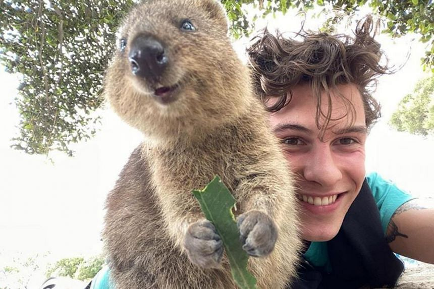 Shawn Mendes took a selfie with the quokka, a small marsupial native to Rottnest Island off Western Australia.