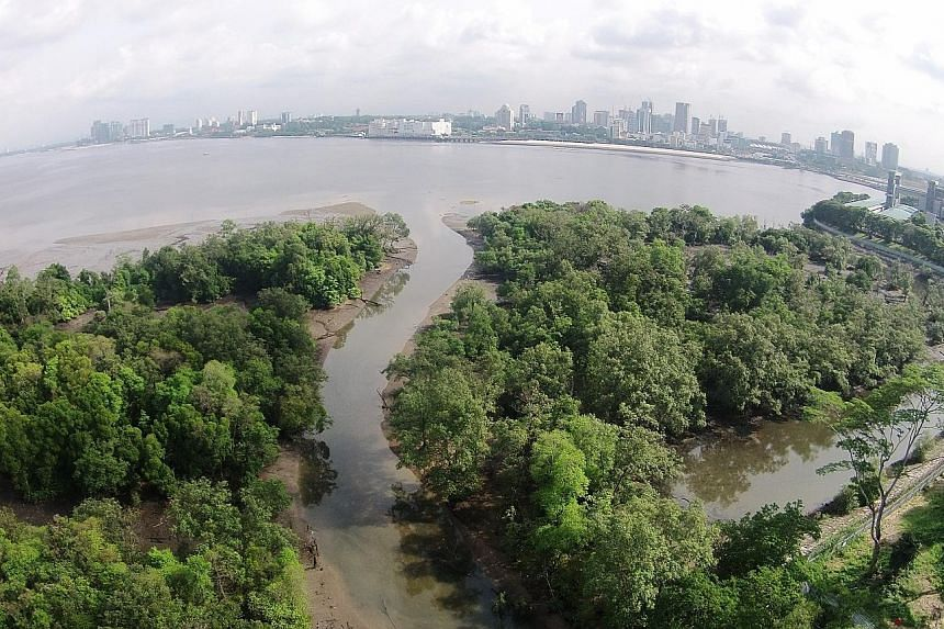 The Mandai Mangrove and Mudflat. Singapore will actively restore its mangrove areas to mitigate coastal erosion, Minister for the Environment and Water Resources Masagos Zulkifli said yesterday. PHOTO: NATIONAL PARKS BOARD