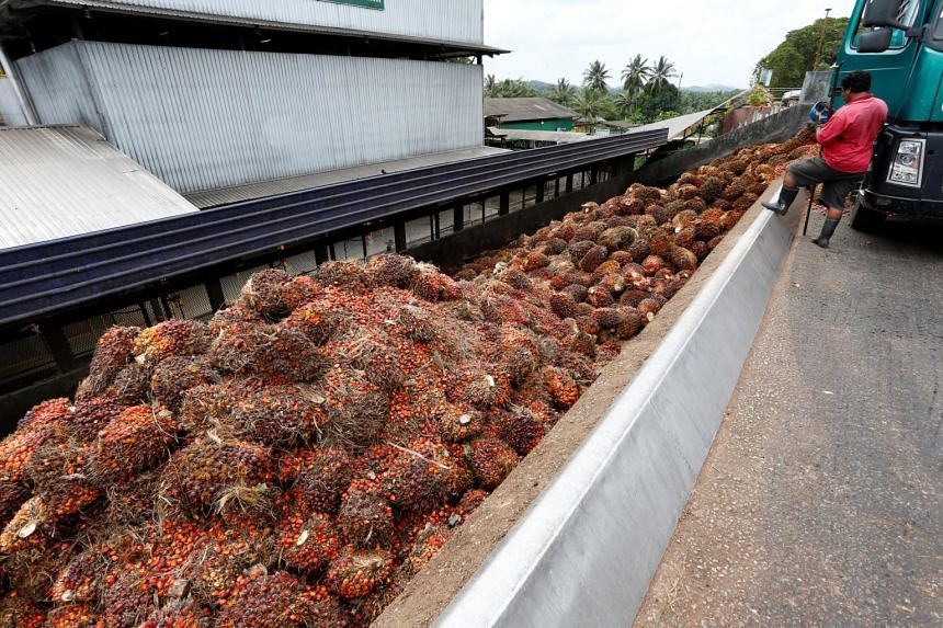 The EU is looking at new limits on food contaminants in refined fats and oils, including palm oil, said Ms Teresa Kok, the Malaysian minister in charge of the palm oil portfolio.