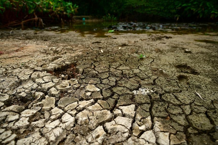 A dried up lily pond at Pasir Ris Park, on Aug 21, 2019. Citizens around the world, including young people, have recognised climate change as a defining issue of their time.