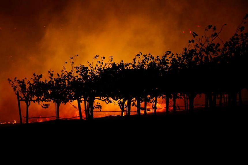 Vines are silhouetted against the Kincade fire burning in a valley below, near California, on Oct 24, 2019.