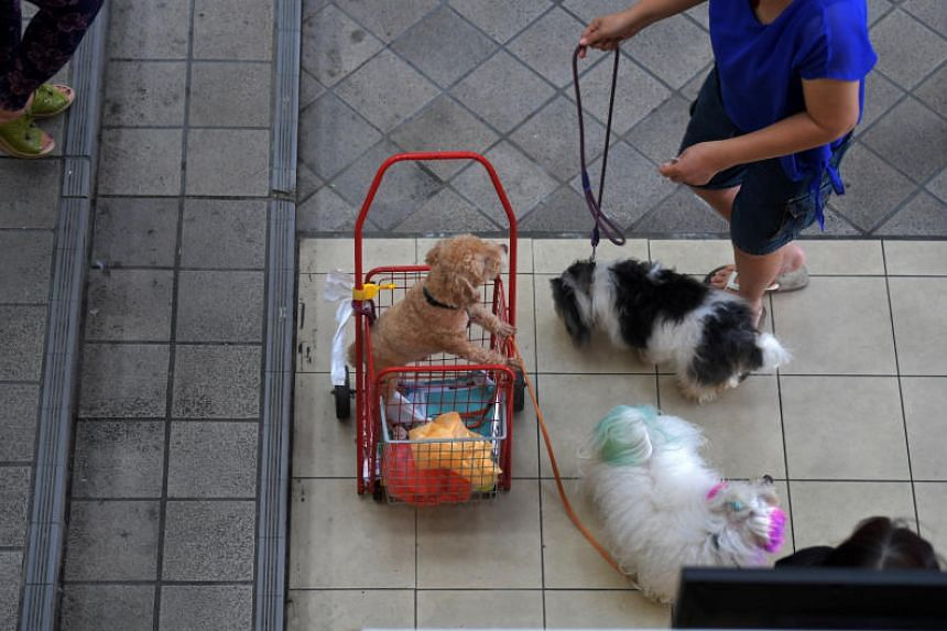 Participants recommended that measures could be introduced to encourage more pet owners to license their dogs and suggested having a common registry to motivate people to microchip their pet cats and dogs.