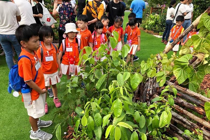 Children from My First Skool touring the exhibits at the Community Garden Festival 2019.