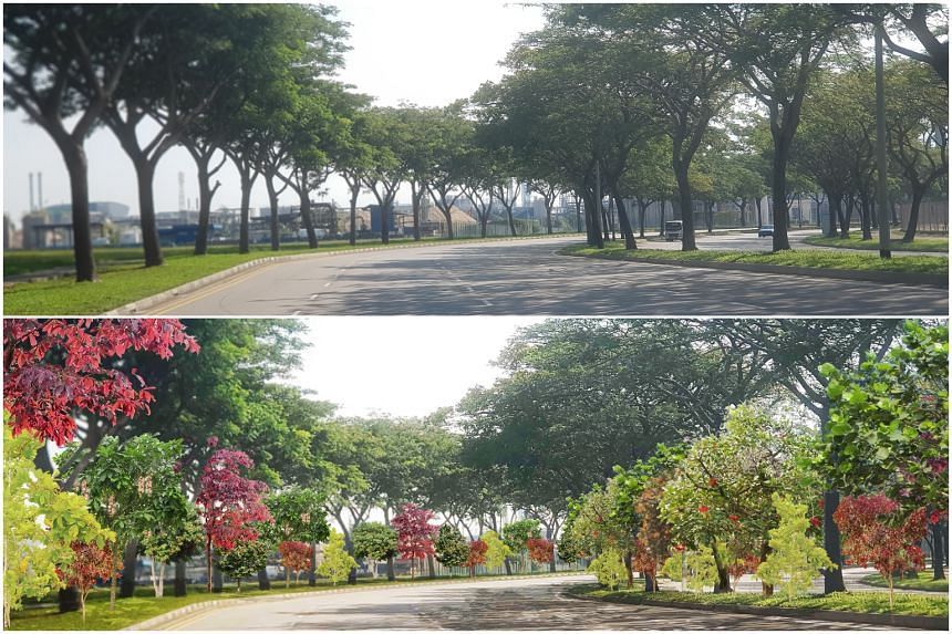 The current Jurong Island Highway (top). Jurong Island Highway after a greening initiative by JTC and NParks to plant 30,000 trees on the industrial island (bottom).