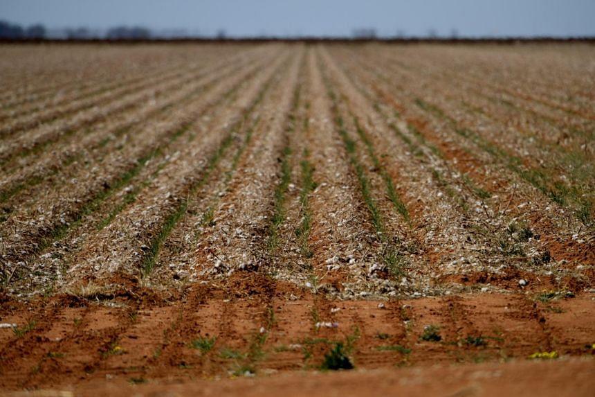 Feeling the heat: Australia offers drought-hit farmers loans