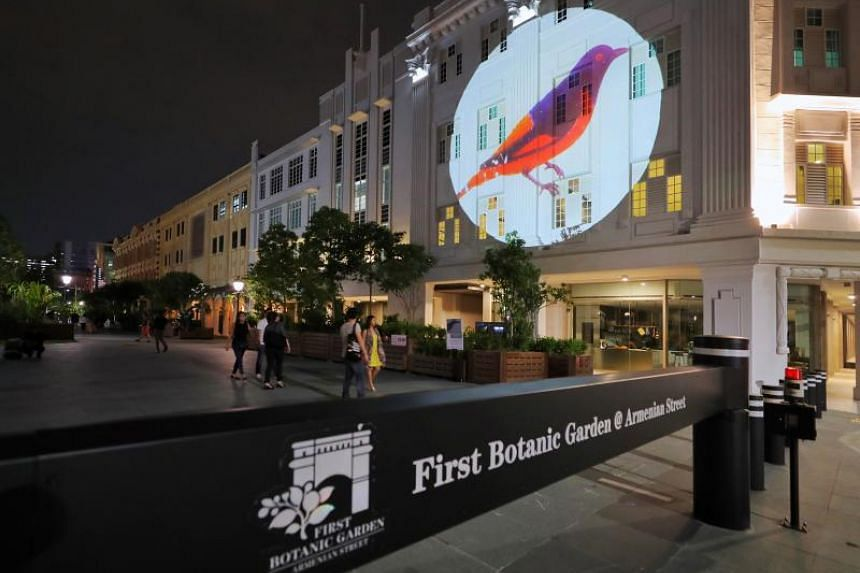 A male Firey Minivet scientific drawing by two French naturalists Pierre-Medard Diard and Alfred Duvaucel, projected onto a building facade along Armenian Street on Nov 8, 2019.