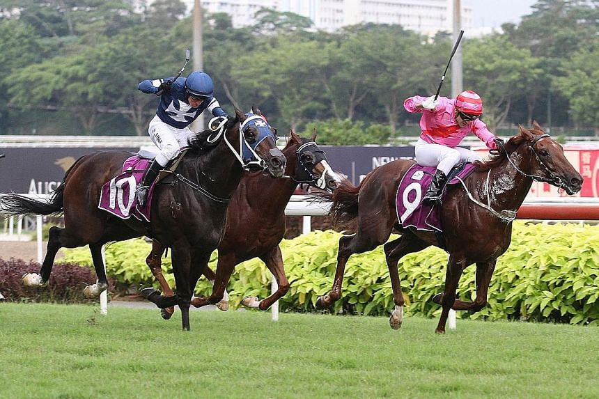 I'm Incredible (in pink) fending off King Louis in the Queen Elizabeth II Cup over 1,800m on Oct 20. King Louis can turn the tables in the Dester Singapore Gold Cup tomorrow.