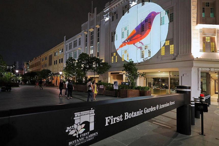The drawings of French naturalists Pierre-Medard Diard and Alfred Duvaucel - who both worked with Sir Stamford Raffles in 1819 - projected onto building facades along Armenian Street as part of the Voilah! France Singapore Festival. A fiery minivet (