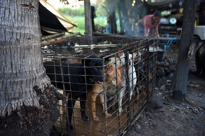 Dogs awaiting their fate in a cage as a woman boils water at a slaughterhouse in Siem Reap province, Cambodia. About two million to three million dogs are slaughtered annually in the country, according to the non-governmental organisation Four Paws,