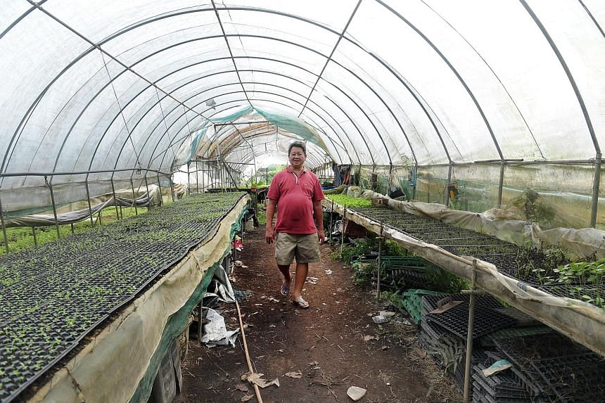 Mr Chai Kien Chin at his Fire Flies Health Farm in Lim Chu Kang, which also houses his family's Thunder Tree stalls selling vegetarian dishes prepared with ingredients such as leafy greens (below) and herbs, most of which are obtained from their farm