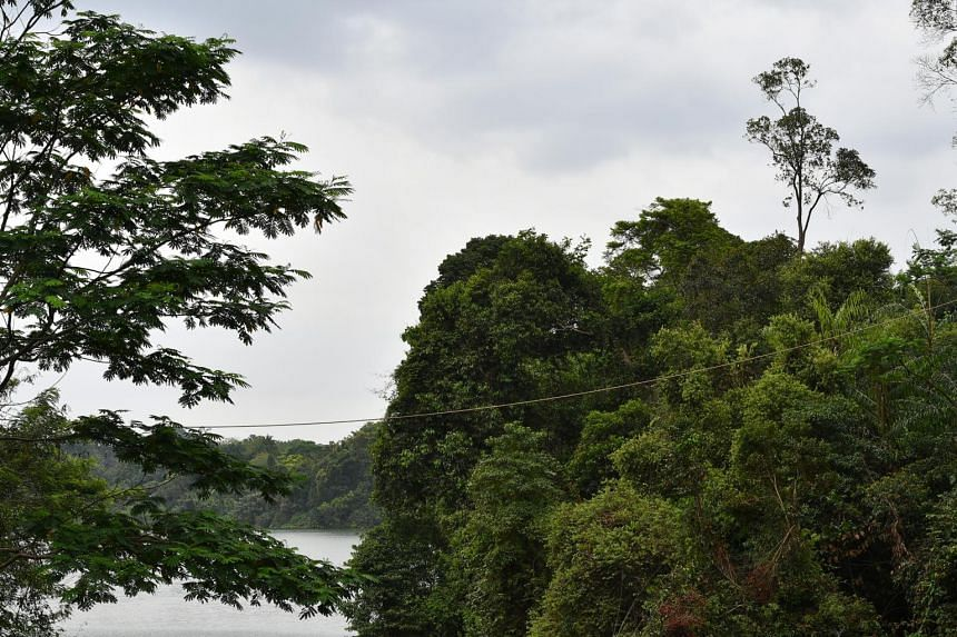 A rope links two patches of forest across a water body at Mandai Road.