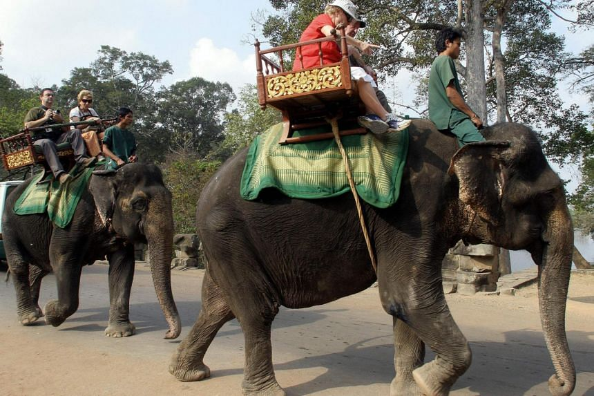 In a file photo taken on Mar 1, 2007, foreign tourists ride on elephants while visiting Cambodia's famed Angkor Wat temple in Siem Reap province.