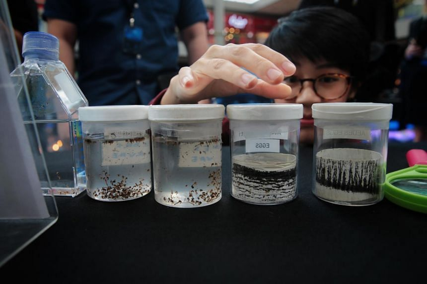 A visitor looks at containers of Wolbachia-carrying Aedes aegypti pupae and eggs at the Project Wolbachia booth at the City of Innovation: Singapore exhibition at Marina Bay Sands on Nov 15, 2019.