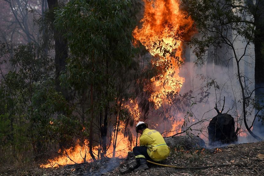 A New South Wales Rural Fire Service firefighter works to contain a bushfire that spread from the Gospers Mountain fire, in New South Wales, Australia, on Nov 16, 2019.