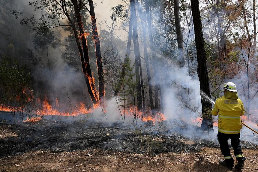 A New South Wales Rural Fire Service firefighter working to contain a bush fire that spread from the Gospers Mountain blaze, near a property in Colo Heights, Australia, last Saturday.