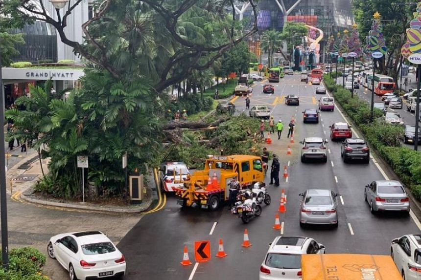 By 4pm on Nov 20, two lanes along Scotts Road had opened and the area where the tree had fallen was cordoned off and the car was no longer under the fallen tree.