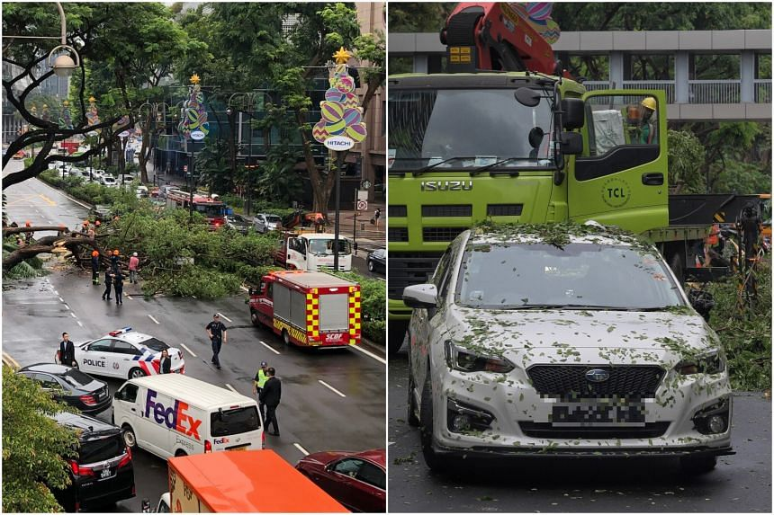 Four lanes of Scotts Road had been obstructed when the tree fell at around 3pm, trapping a driver in a car.