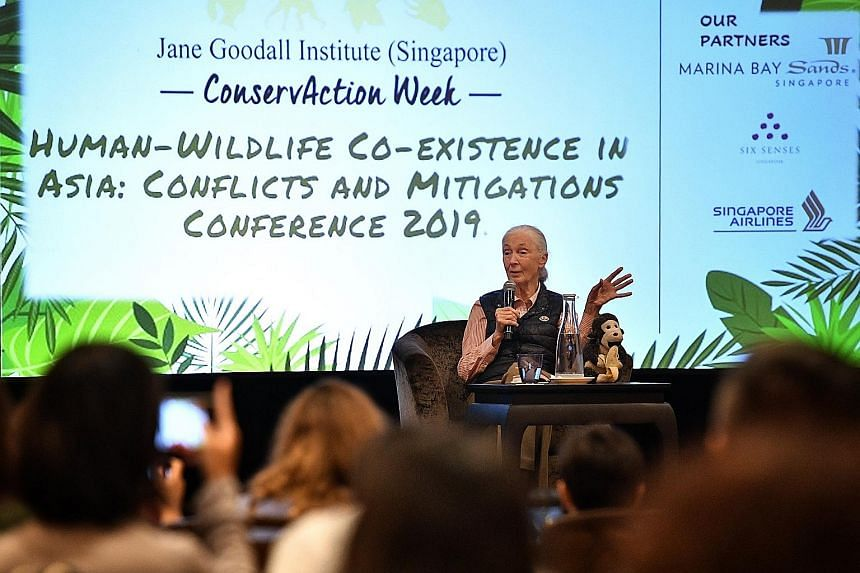 Dr Jane Goodall speaking at the Human-Wildlife Co-Existence in Asia: Conflicts and Mitigations Conference 2019 at Marina Bay Sands Expo and Convention Centre yesterday. The renowned primatologist discussed the pressing issue of human-wildlife conflic