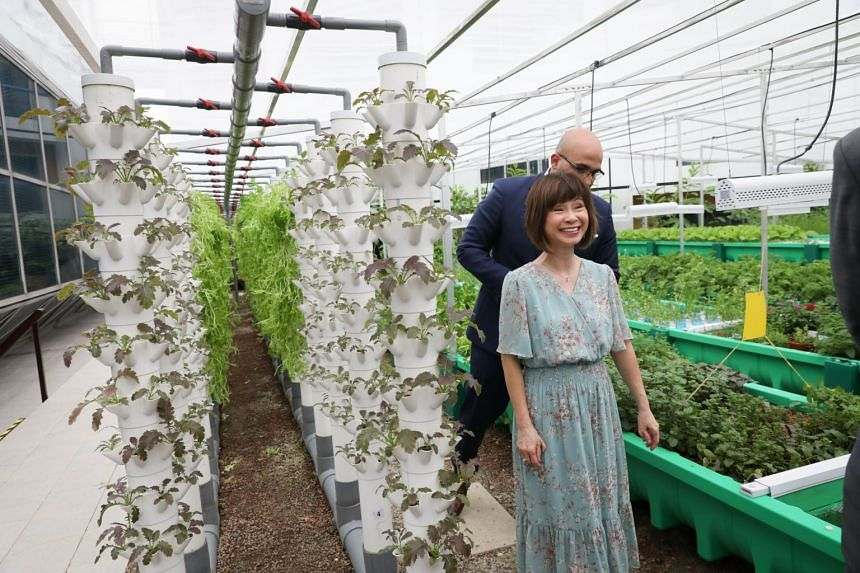 Senior Minister of State for the Environment and Water Resources Amy Khor touring Fairmont Singapore and Swissotel The Stamford's Aquaponics Garden on Nov 27, 2019.
