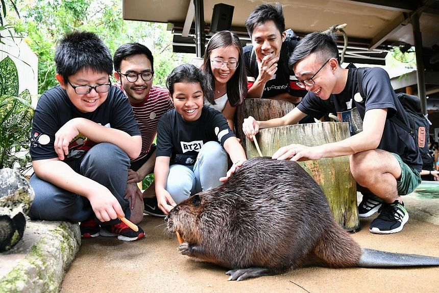 Loh Khim San and Anis Farhana Muhammad Effendi feeding a beaver at the River Safari as Straits Times journalists (from left) Tee Zhuo, Goh Yan Han, Yeo Sam Jo and Timothy Goh look on. The two children were part of a group of 27 who got a chance to see wha