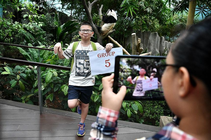 Justin Sim striking a Kung Fu Panda pose at the panda exhibit, one of the tasks during a scavenger hunt planned by ST journalists yesterday.