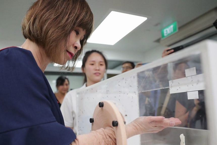 Senior Minister of State for the Environment and Water Resources Amy Khor places her hand in a cage full of male Wolbachia-Aedes aegypti mosquitoes, which do not bite, at the launch of a new mosquito breeding facility in Ang Mo Kio on Dec 2, 2019.